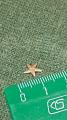 Петит морская звезда