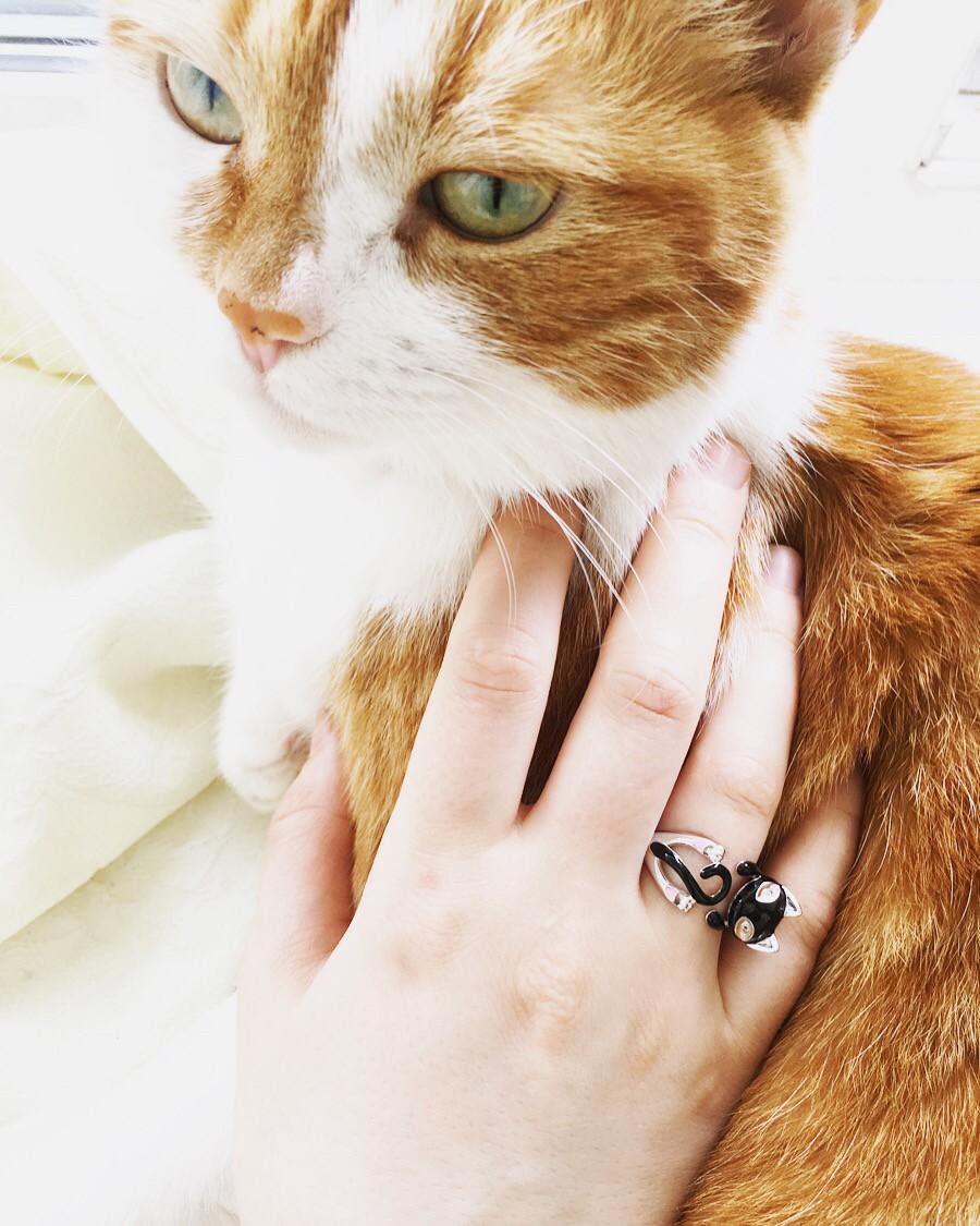 Очень милый котик 😊